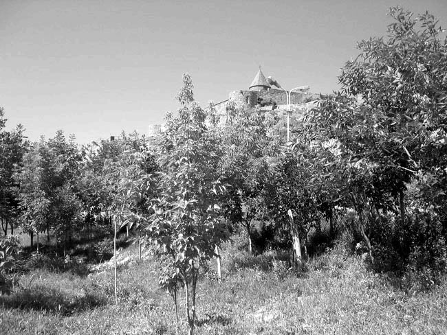 In five years, the Armenia Tree Project managed to transform the desert-like surroundings of the ancient monastery of Khor Virap near Mt. Ararat in 2001 into one that is teeming with life in 2006.